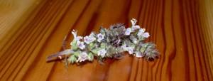 ホーリーバジルの開花