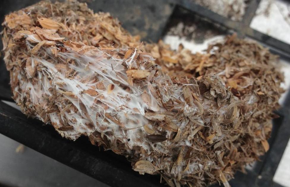 米糠と籾殻の土着菌