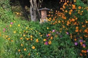 里山の日本ミツバチ