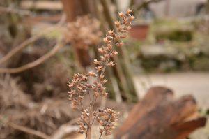 東峰村産の荏胡麻の種
