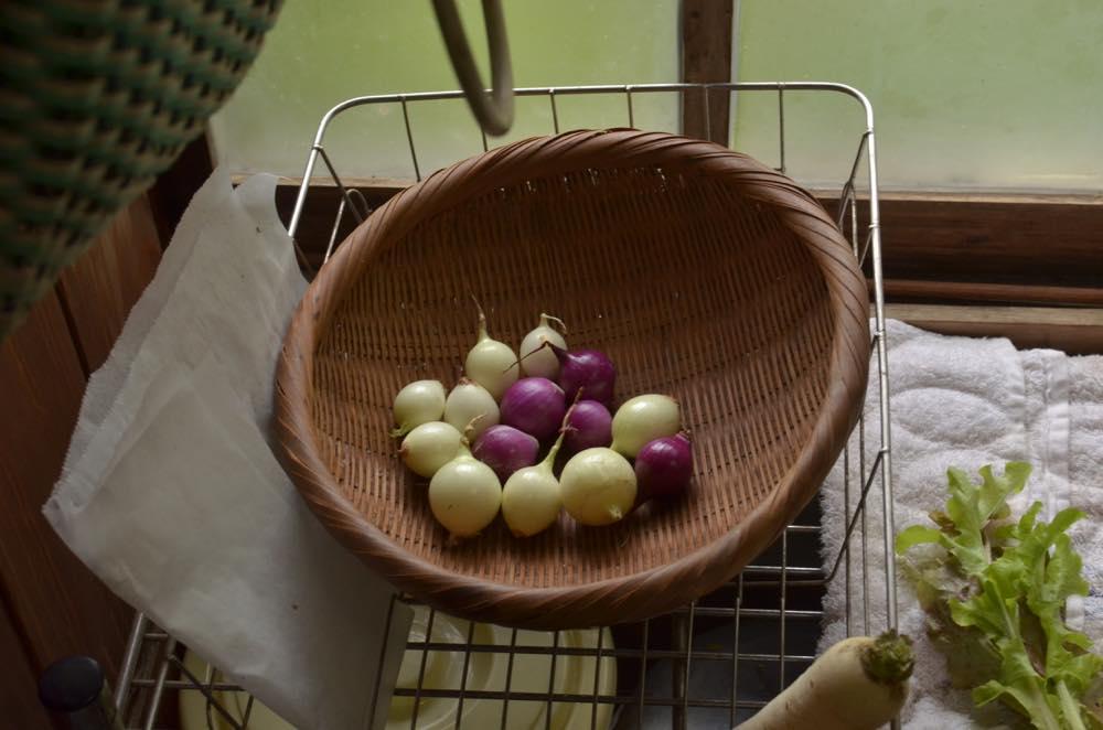 東峰村田舎暮らし収穫した玉ねぎ