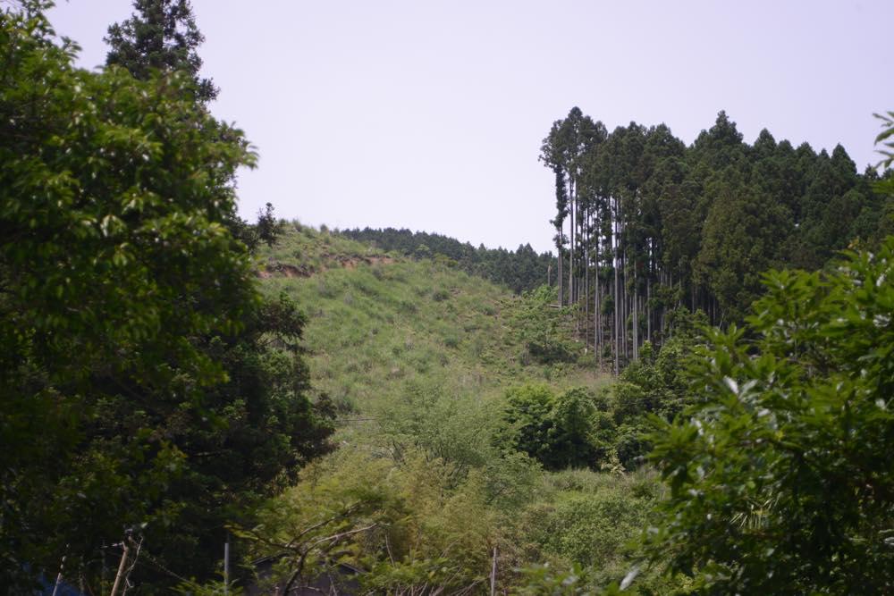杉を伐採されて二回目の夏 山の景色