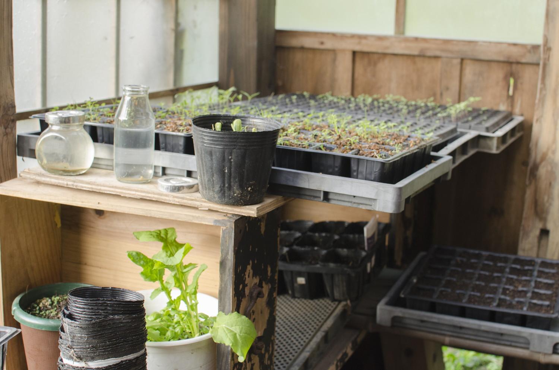 ハーブや野菜の苗