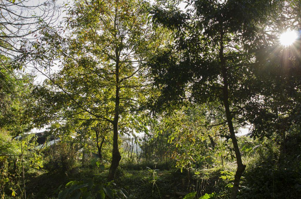 新月 森の畑