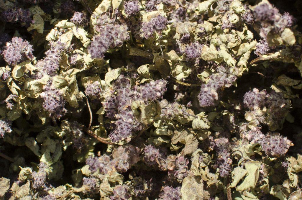 トゥルシー(ホーリーバジル)の乾燥